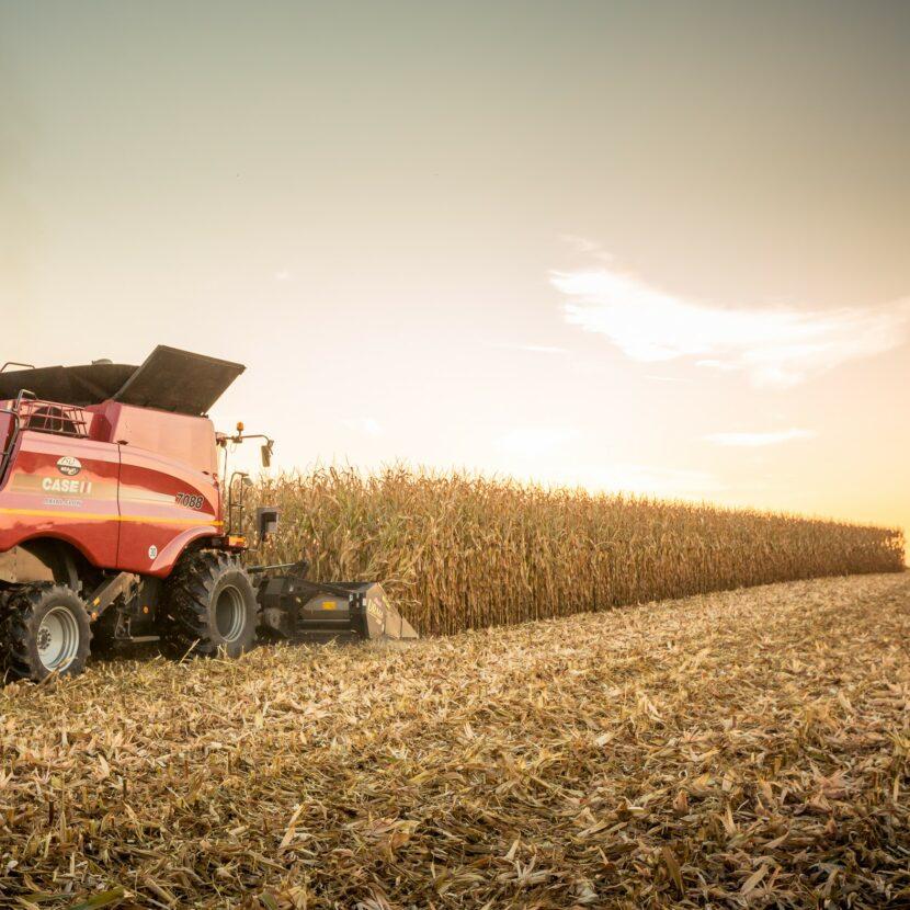 Mährdescher während der Maisernte auf offenen Feld während Sonnenuntergang